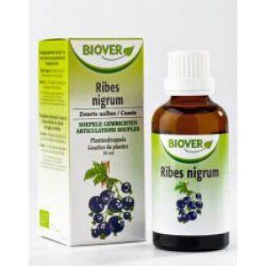 Biover Ribes Nigrum Zwarte Aalbes